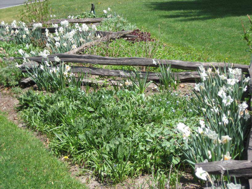 Spring at Field Park